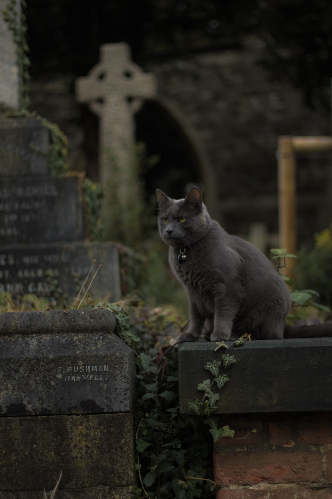 Cat sat on tombstone.  Grieving the loss of a pet? Get help from Sarah Tuckett Psychotherapy in North Brisbane