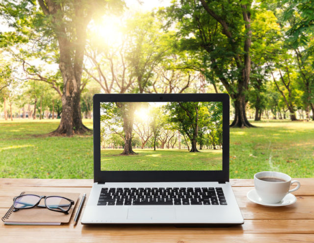 Laptop and trees - how to prepare for online therapy with Sarah Tuckett Psychotherapy and Counselling North Brisbane